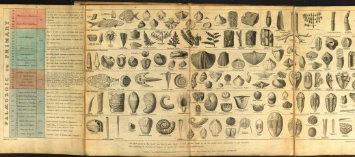 "Joseph Wilson Lowry, ""Tabular View of Characteristic British Fossils, Stratigraphically Arranged"" (1853) from ""Science Circa 1859: On the Eve of Darwin's 'Origin of Species."" The exhibit, which opens Monday, Nov. 23, in the Memorial Library's Special Collections, explores the state of science before Darwin's groundbreaking book ""On the Origin of Species."""